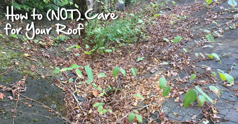How to NOT care for your roof