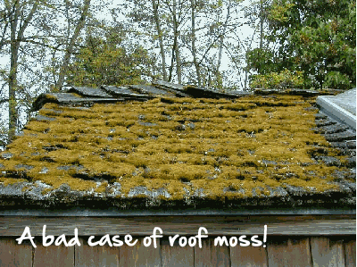 Why Roof Moss is Bad and How to Get Rid of It